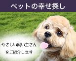 ペットの幸せ探しお手伝い